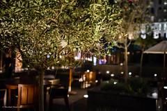 olive tree (mfauscette) Tags: tree night hotel dubai olive sonyrx1