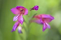 Acercamiento (miratumismo) Tags: macro flora bokeh flor 2012 viladecans remolar 15028 5dmk2