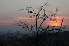 Darkness falls (El Alcalde de l'Antartida) Tags: sunset tuscany firenze florence italia italy tree fall autumn evening tramonto cielo luce sky toscana landscape paesaggio panorama rami oscurita alberi darkness autunno sera
