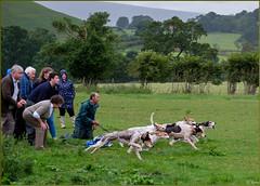 Rosedale Show 2016 - Hound Trail (Hector Patrick) Tags: flickrelite fujifilmxpro2 fujinonxf100400roiswr northyorkmoors northyorkshire rosedale rosedaleabbey rosedaleshow yorkshire britnatparks twop