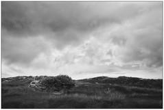 Alone #2 (Wayne Interessiert's) Tags: norderney insel le island wattenmeer dnen dunes landschaft landscape paysage wolken clouds nuages sky ciel monochrome bw black white noirblancphoto baum tree arbre sturm storm tempte