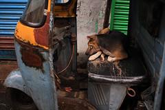 That eternal itch (Rajib Singha) Tags: travel street animal dog habit transport interestingness flickriver canoneos40d kumortuli kolkata westbengal india
