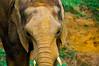 elefante (Rafa Devesa) Tags: cantabria altocampoo reinosa argüeso gato avestruz paisaje atardecer surf agua mar angel flor azul fuentede picosdeeuropa españa spain nikon d3200
