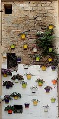 give me a water! (roberto620202) Tags: flowers nature vegetation flowerpot slovenija piran wall
