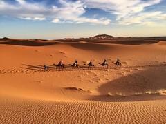 Expedicin (yanitzatorres) Tags: serie sahara arena dunas caravana camellos desierto morocco dromedarios marroqu marruecos