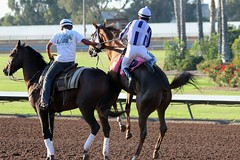 Up And Away (kimpossible pics) Tags: horseracing racehorse horse equine thoroughbred racetrack jockey losalamitos losalamitosracetrack cypress ritoalmanza backintheacademy leadrider leadpony