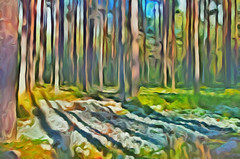 Pine Forest (Kalev Vask.) Tags: digital kalevvask postproccessed dap estonia photomanipulation digiart photoart forest nature autumn artdigital