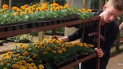 cultivo de flores (jakza - Jaque Zattera) Tags: trabalhador jovem empurrando floricultura