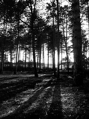 Sunset at the Edge of the Forest - B&W (SRHart (84)) Tags: trees light sunset shadow summer blackandwhite sunlight black silhouette stone pine contrast forest lumix rocks flickr decay award sunsets strong greenery sherwood strongcontrast anawesomeshot flickraward diamondclassphotographer flickrdiamond flickraward5 flickrawardgallery