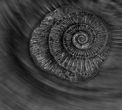 Day 346 of 366 Ammonite Spin (Chris Willi