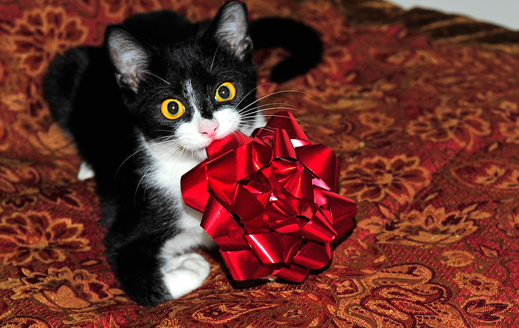 The World's newest photos of kitten and zorro - Flickr Hive Mind