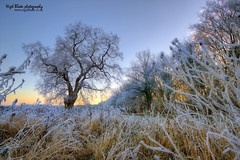 Hatfield forest frosty dawn (Nigel Blake, 14 MILLION...Yay! Many thanks!) Tags: winter cold forest landscape photography dawn frost hatfield blake nigel essex