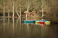 'Roosting' reflections... (Halliwell_Michael ## More off than on this week #) Tags: trees winter reflection birds reflections boats gulls lakes halifax westyorkshire 2012 boatinglake shibden shibdenpark nikond40x