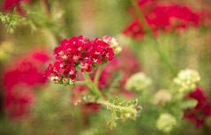 Floral Prose