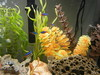 DSCN5078 (haileyxb) Tags: fish aquarium tetra neontetra