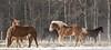 "Wind Blown Draft Horses (deirdre_1) Tags: winter horses canada rural sony a350 ""flickraward"""