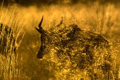"Sunrise in Okavango Delta, Botswana • <a style=""font-size:0.8em;"" href=""https://www.flickr.com/photos/21540187@N07/8293303945/"" target=""_blank"">View on Flickr</a>"