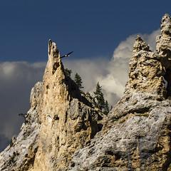 Flying high (Michel Couprie) Tags: sky mountain france alps bird nature clouds montagne alpes canon landscape eos eagle ciel 7d nuages paysage oiseau izoard aigle cassedserte