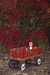 Calvin & Hobbes. (The Vision Beautiful) Tags: autumn trees red fall leaves childhood animal youth forest wagon toy stuffed woods doll comic tiger recreation hobbes radioflyer calvinhobbes nostaglia imaginaryfriend billwatterson
