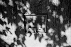 otherland (SimonSawSunlight) Tags: shadow white black film leaves 35mm photography documentary rangefinder m shade frame analogue sortof otherland