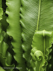 """Green Leaves • <a style=""""font-size:0.8em;"""" href=""""http://www.flickr.com/photos/44019124@N04/8309941811/"""" target=""""_blank"""">View on Flickr</a>"""