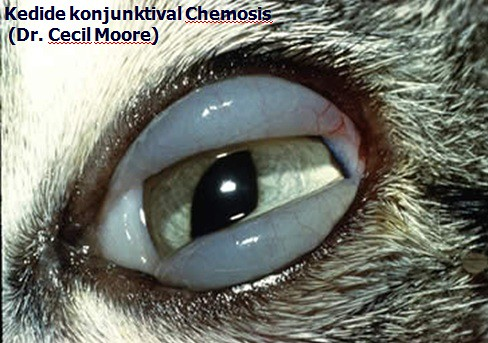 the world's best photos of chemosis - flickr hive mind, Skeleton