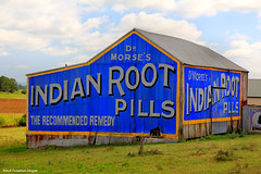 Dr Morse's Indian Root Pills Sign - Raworth, Morpeth Road, NSW (Black Diamond Images) Tags: sign barn shed australia nsw morpeth huntervalley maitland letterheads patentmedicine raworth indianrootpills tenambit eastmaitland gloverst corrugatedironshed drmorsesindianrootpills refurbishedsign ajwhite therecommendedremedy morpethrd andrewbmoore comstockco impurityoftheblood hilandcres pitnacree hilandcrescent raymudd rootpills