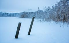 DSC05973.jpg (Vaajis) Tags: winter lake snow forest reeds jetty depthoffield poles bluemoment