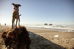 rockaway 3 (NymphoBrainiac) Tags: beach dogs oregon coast belmont rockaway brisco