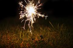 New Years Eve (emilykember) Tags: light plant green grass night canon bokeh sigma disney sparkle pixar newyearseve 365 sparkler happynewyear walle 30mm 50d itsagiraffe walle365
