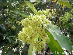 ดอกไม้โปรด รัชกาลที่ 6 วัดญาณเวศกวัน