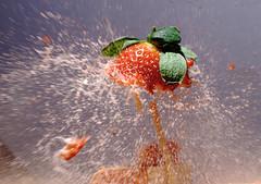 Strawberry Explosion [Explored] (bojangles_1953) Tags: fruit strawberry explosion highspeed