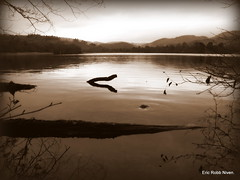 Loch of the Lowes (Evening light ) (eric robb niven) Tags: sepia scotland dundee dunkeld lochs lochofthelowes canong12 ericrobbniven