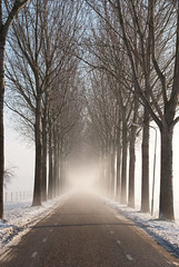 Vanishing Point (j.elemans) Tags: winter sun mist snow holland tree nature dutch nijmegen vanishingpoint poetry poem sony boom gedicht beuningen kou gelderland a300 ilobsterit