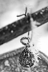 Extra Weight (Nomadic-Imagery) Tags: blackandwhite macro ice monochrome frozen dof freezing depthoffield iced weight lever weighingscales canoneos50d 12mmkenkoextensiontube canon70200mmf4lislens