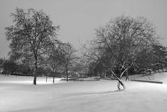 Parc Andre Malraux under snow (mznparis) Tags: snow earlymorning hautsdeseine nikond80 tokina1116mmf28 nanterreprefecture parcandremalraux