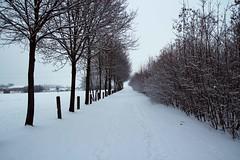 Snow Path (Tristan Blaskowitz Photography) Tags: schnee winter snow streetart nature forest germany natur tamron wald f8 f28 weg wunderbar rheinlandpfalz schn iso640 wrrstadt 1750mm iso360 landstrase canon600d tristanblaskowitz