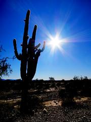That Arizona Sun Shining Over Kofa (TheJudge310) Tags: arizona cactus usa sun landscape unitedstates wildlife national yuma 2012 refuge kofa canonpowershots100 riseofthephoenix