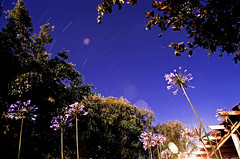 First Attempt at Star Trails (inefekt69) Tags: longexposure flowers trees nature garden lens stars space orb astrophotography lensflare flare lighttrails universe startrails southcelestialpole lensflareorb