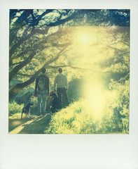 Walk (Antonio De Lucci) Tags: light portrait people color men film dogs polaroid guys portraiture backlit protection sunflare instantfilm antoniodelucci impossibleproject px680