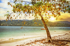 Sun shy - Tree fall (maan.pho) Tags: morning trees sunset sea sun beach nature night landscape
