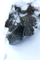 Coyote's Den (sefdesign) Tags: old winter cemetery northwestterritories backbay yellowknife 2013 coyotesden