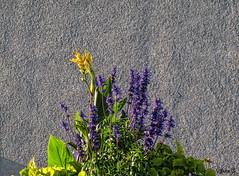... (Jean S..) Tags: balcony flowers purple green yellow concrete texture shadow urban