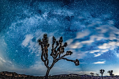 Arch of Stars (MarcCooper_1950) Tags: mikly way joshua tree new moon galaxy stars nightscape desert night sky landscape nikon d810 hdr lightroom samyang14mmf28 mojave milkyway panorama pano swirls clouds