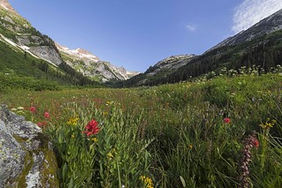 Spider Meadows Wildflowers, Glacier Peak Wilderness
