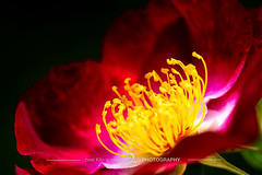 urge //  (zwei_kilo_gramm) Tags: sapporo  6  june nature flower hokkaido    japan