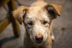 Stray Puppy in Nepal (Stewart Miller Photography) Tags: stray puppy portrait nepal canon 6d ef24105mm hoya filter    bts rt black white red green yellow blue color colors colour colours android art news light old new me travel trip photo fun geotagged dog