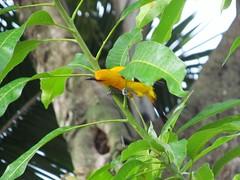 Recorriendo Mompox. (critiantorrex1) Tags: colombia travel turismo adventure history arquitectura cementerios aves naturaleza mompox bolvar costa colombiano colombiana