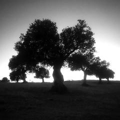 The first (Antonio Jimnez Falcn) Tags: movil phone iphone iphotographers sunset blackandwhite blancoynegro atardecer negro blanco arbol arboles naturaleza bio momentos gray gris fotografo foto camino andando paseo