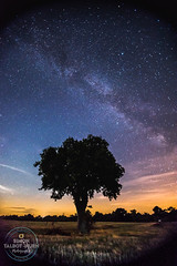 Heavens Above...!!! (SimonTHGolfer) Tags: sky night stars milky way milkyway tree lightpollution astronomy astrophotography dark suffolk eastanglia nikon highiso simontalbothurnphotography sigma landscape skyscape